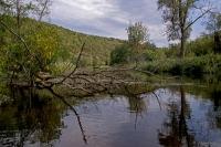Kamp zwischen Kamegg und Altenhof