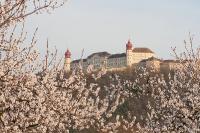 Stift Göttweig - Marillenblüte
